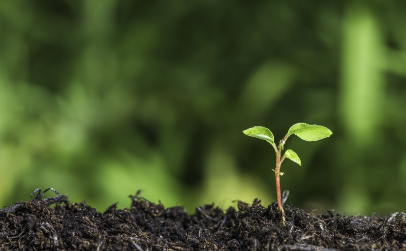 jeune plante poussant du sol